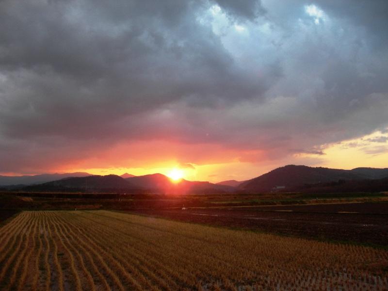 080326 春雷豪雨と桜の蕾: 西浜...